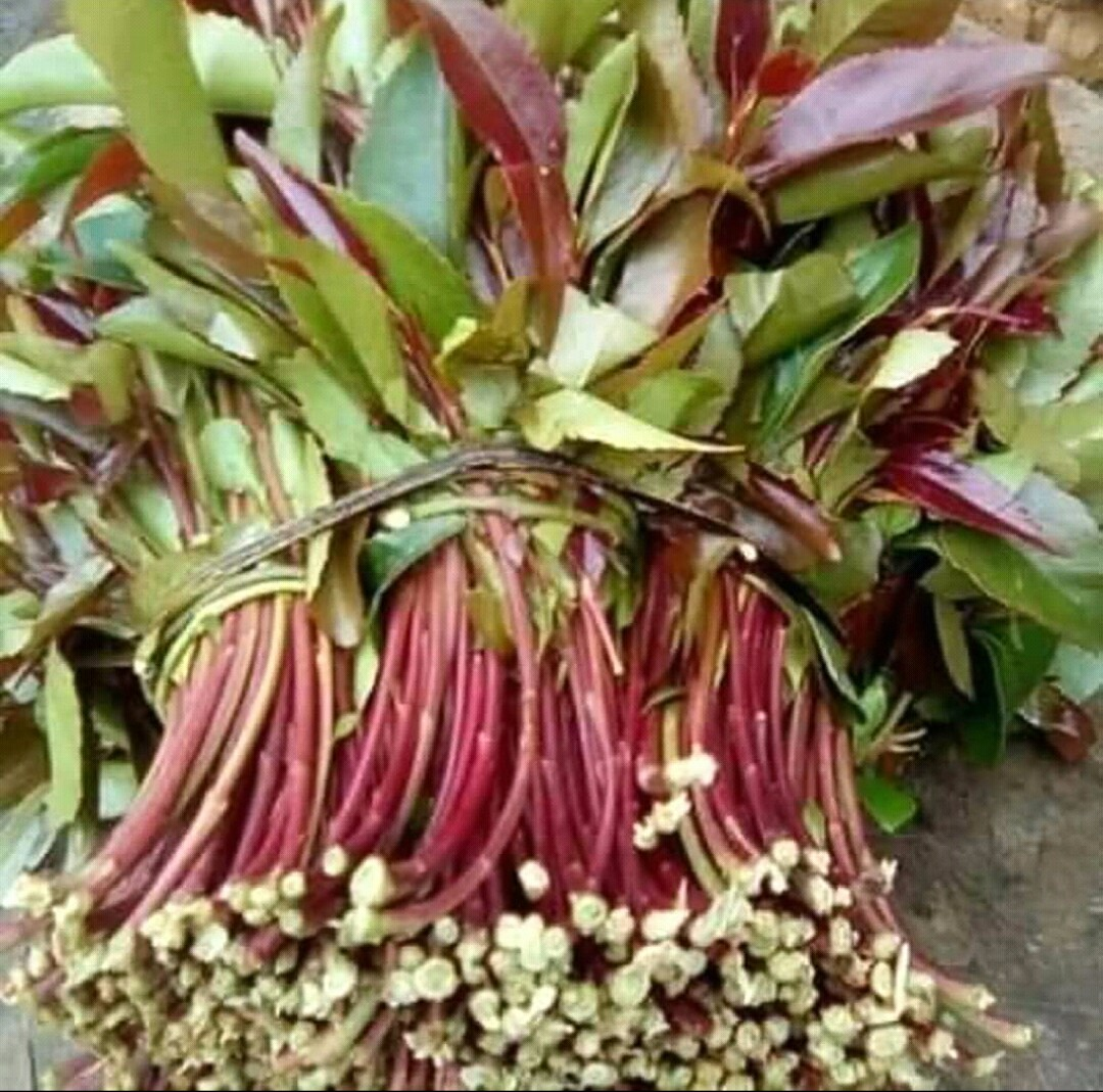 Image of miraa photo I took in marketplace